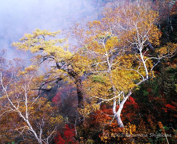 秋色の樹々