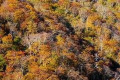 秋深まる山