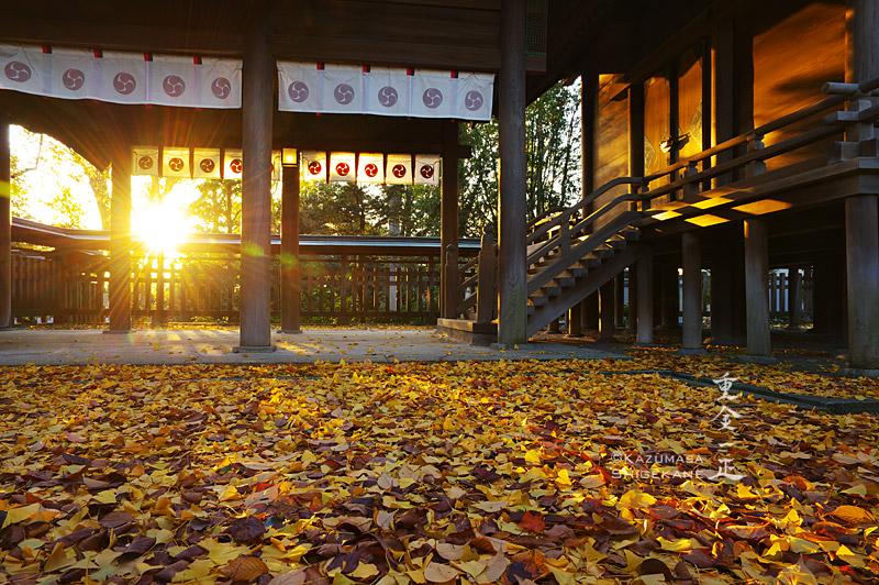 所澤神明社 ご本殿に夕日と銀杏の葉