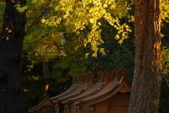 所澤神明社 秋の葉に夕照