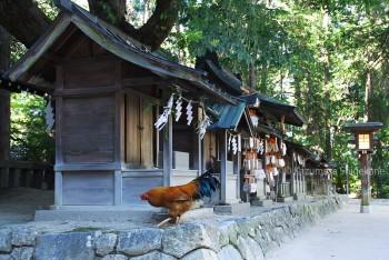穂高神社 d20150721-074