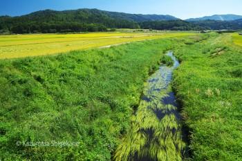 姫川と田園風景・白馬村神城(d20150922-595)