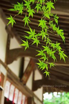 春日神社(埼玉県入間郡越生町) d20151101-221