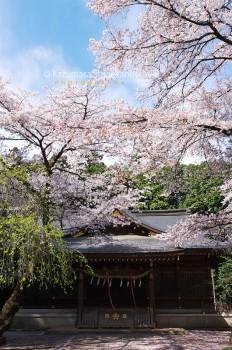 北野天神社 d20160406-013