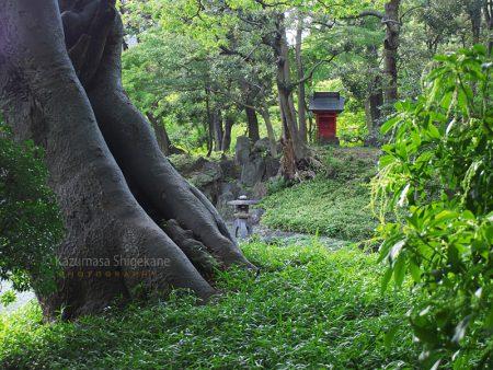 小石川後楽園 蓬菜島