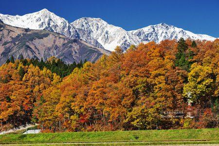 白馬三山と里の紅葉
