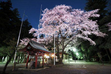 北野天神社の夜桜