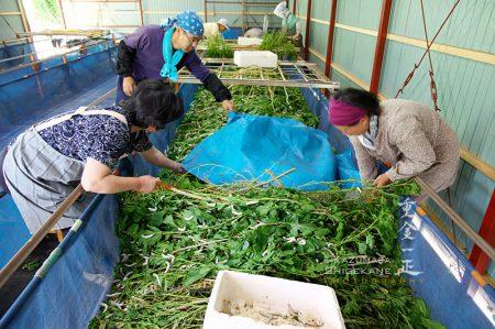 所沢市北野南の養蚕農家
