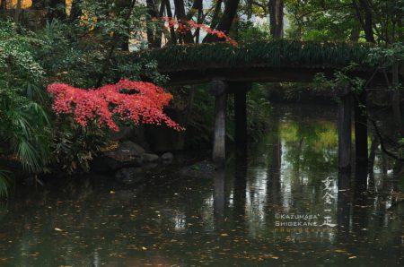 晩秋の六義園
