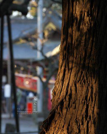 初詣 北野天神社