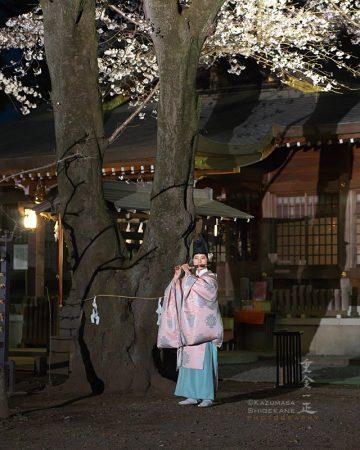 北野天神社 夜桜あかり 宮司さんによる龍笛演奏