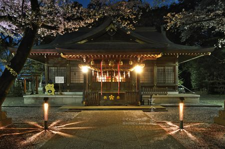 北野天神社 夜桜あかり 竹灯籠