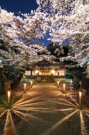 北野天神社 夜桜あかり