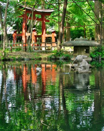調神社 神池